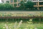 广东城中村涂千米墙绘 变身文艺小镇