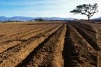 土改试点延期一年 拟与《土地管理法》修订同步完成