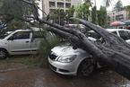 印度雨季暴雨引发洪灾 造成至少76人死亡