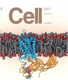 视紫红质和抑制蛋白复合物的高分辨率三维结构.蓝色所示为视紫红