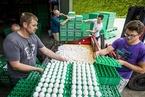 欧洲各地下架上百万只受污染鸡蛋 比利时荷兰互怪彼此瞒报