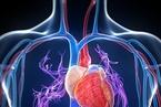 研究发现PM2.5危害心血管健康新机制