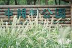 """唐家岭""""变形计"""":从""""蚁族""""群居地到中关村森林公园"""