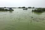 环保一刀切 江苏拟修改《省太湖水污染防治条例》