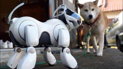 时隔20年 索尼机器狗借力AI重返市场