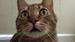 Google面部识别功能将适用于宠物