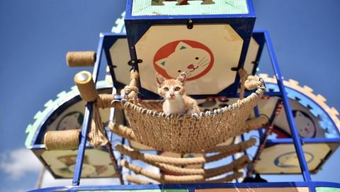 土耳其梅尔辛为流浪猫设公园 吃喝玩乐一应俱全