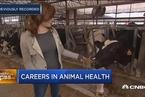 兽医就业机会将在10年内增加18%