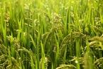 哪些省份哪些农作物肥耗最低? 官方报告如是说