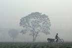 印度新德里雾霾成灾  车辆排放、农作物焚烧和燃煤是元凶