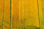 环保部:将重点治理水稻、小麦重金属污染耕地