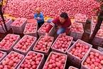 特稿|多空大战苹果期货 惠农创新如何回归初心