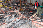 """农业部:中国计划大幅削减渔业捕捞量,对非法捕捞""""零容忍"""""""