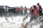 """""""十三五""""远洋渔业发展规划出台 将严控并提高企业准入门槛"""