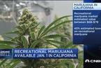 加州娱乐用大麻合法化会带来多大经济效益?