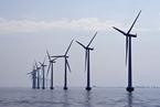 电缆穿越生态红线  广东海上风电项目激增引环保担忧