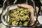 美司法部决定收紧大麻执法力度 已合法化的各州或受冲击