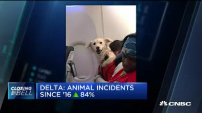 飞机客舱内动物事故频发 达美航空收紧申请标准