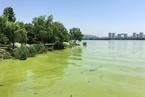 """新版太湖水污染防治条例开""""窄门"""" 允许污染企业减量替代"""