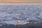 风暴致北极出现史上最高温2℃ 比正常气温高出30℃