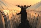 中国扶贫未来路——访中国人民大学中国扶贫研究院院长汪三贵教授