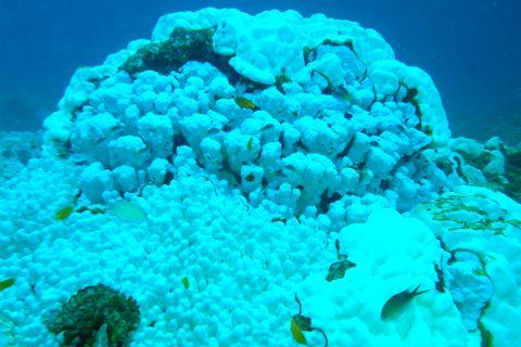 Tara科考队:太平洋珊瑚退化严重