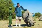 沙龙365登入上最后一头雄性北方白犀牛死了 一个物种或将灭绝