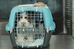 事故频发 为何美联航还要做宠物运输的生意?