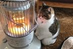 究竟是什么让我们如此迷恋猫?