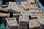全国海洋生态公益维权第一案提起公诉 检方索赔1.3亿