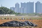 海南鼓励房企将住宅土储用于发展其他产业