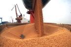 杜鹰:建立对进口大豆转作食品用途的监管机制