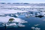 科学家:22年内北极夏季海冰可能完全消失