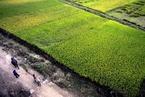 改革开放40周年|农村改革的江苏贡献