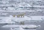 北极海冰中发现大量微塑料 比之前预估更严重