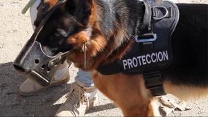 这些宠物犬在西班牙用来击退家暴者