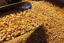 陕西非法制种转基因玉米案获判 种子流向东北