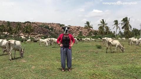 在印度做牛比做女人更安全?