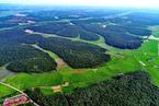 研究:退耕还林能让已消失的物种重归自然