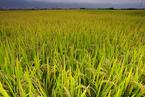 极飞科技联手拜耳、淘宝 主打新型农业示范基地