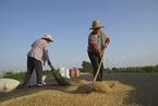 中国农民有了丰收节,节日设立为何多争议
