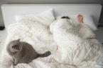 研究:睡得太多或太少 都可能患代谢综合征