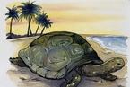 中年困境和乌龟