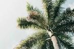 树冠的顶级智慧:启发超音速飞行器降温新技术|Physics World专栏