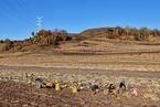 东北黑土区肥力不断退化 吉林施行地方保护法规