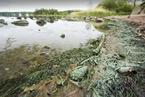 低光照下能生成氧气 蓝藻或令火星适宜人类居住