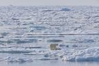 巴伦支海显露气候变化临界点 正融入大西洋