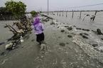 海平面上升或带来10多万亿美元经济损失