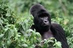 刚果环境部长信件曝光 涉濒危动物出口中国