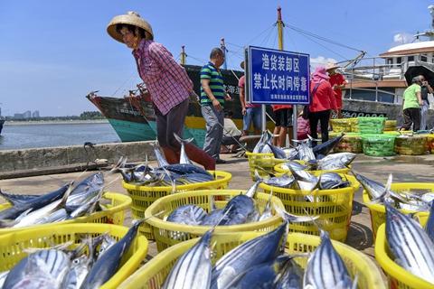 """让盘中鱼更""""环保"""" 渔港港长制要来了"""
